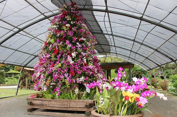 ビオスの丘 花のクリスマス2020