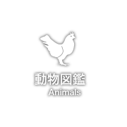 동물 도감