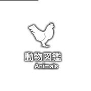 Animal illustrated book